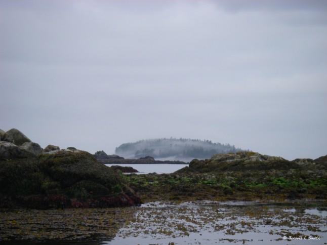 morning fog in Barkley Sound