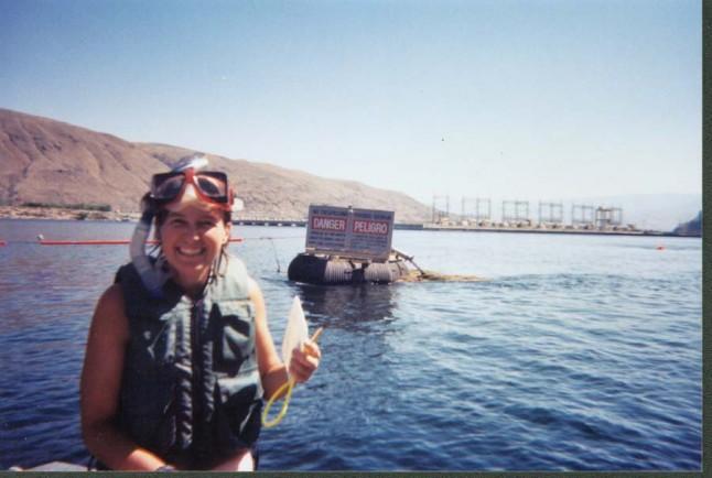 snorkel surveys for salmon, Rocky Reach Reservoir, WA