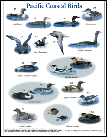 Seabird Research Guides - Jo Smith